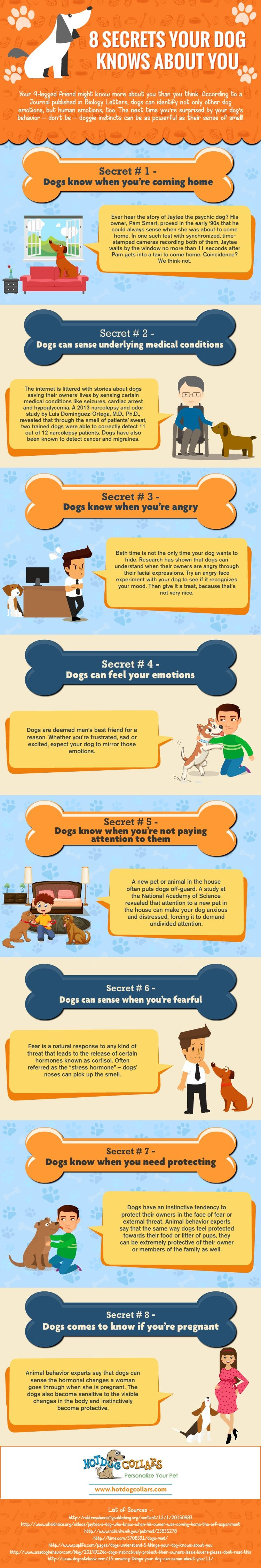 Secrets your dog knows