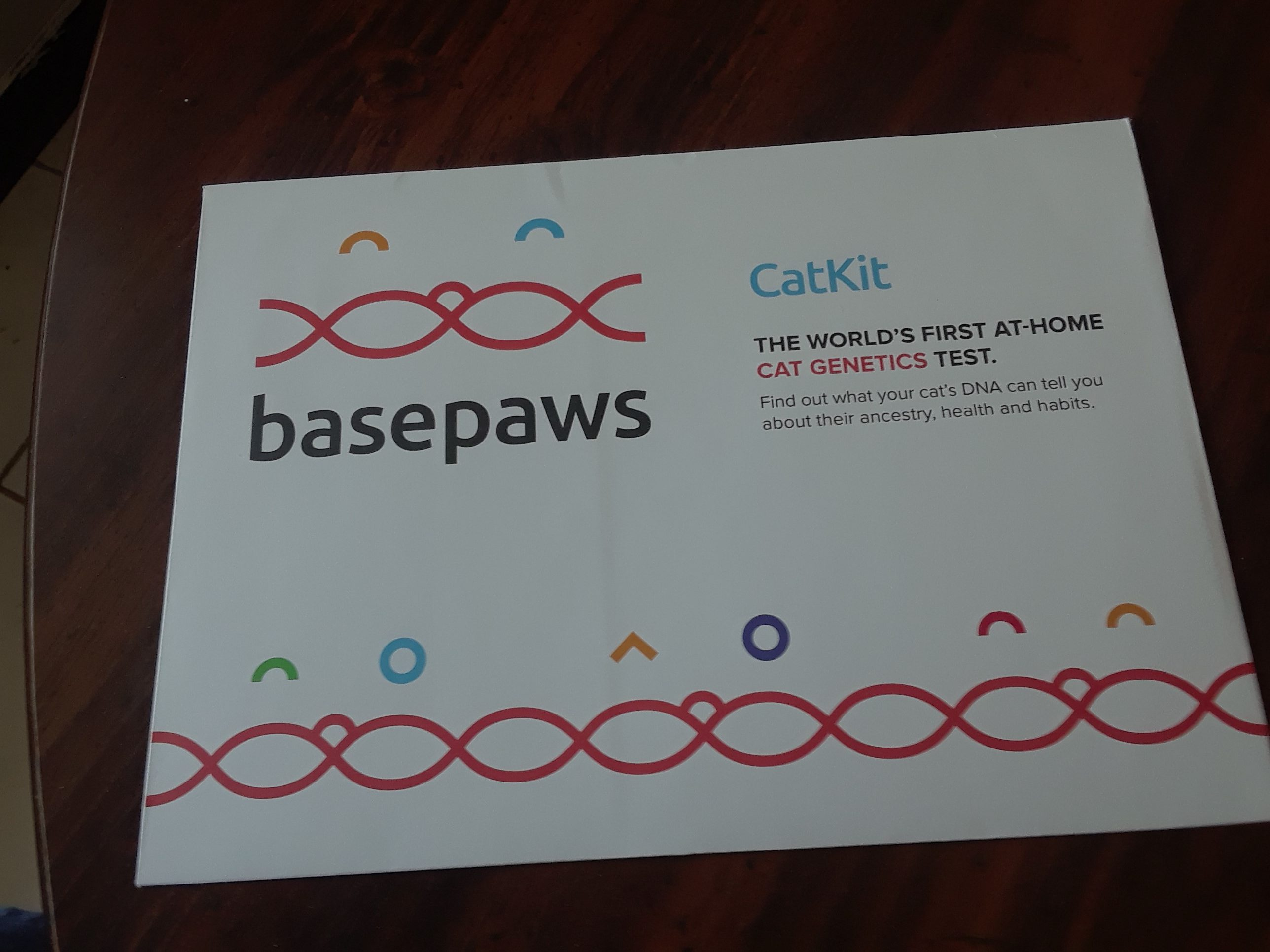 Get Your #Cats DNA Testing From Basepaws #Review #HGG18 @basepaws