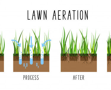 Everything To Know About Lawn Aeration And Its Benefits