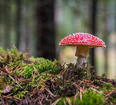 Magic Mushrooms For Wellness- Discover The Wonders Of Shrooms